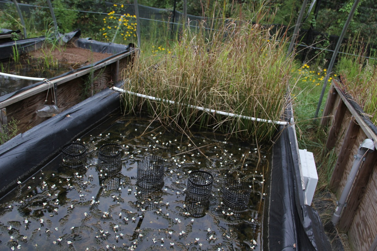 One of thirty simulated wetland ecosystems in the mesocosms. These offer researchers a uniquely realistic environment in which to conduct experiments on nanomaterial transport, transformation, and biological/ecological interactions.