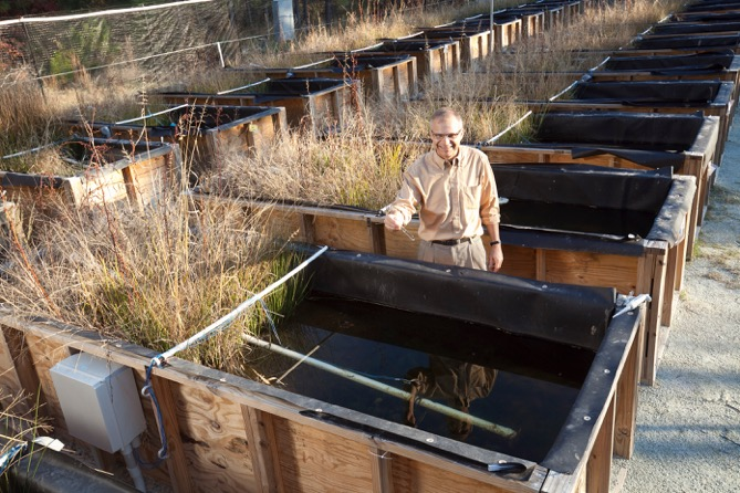 Wiesner at CEINT's mesocosms, a research facility located in the Duke Forest. It houses self-contained environments in which nanomaterials are released and studied.