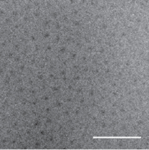 An image of the newly repackaged pharmaceutical under a transmission electron microscope. The dark spots are the water-insoluble cores of the nanoparticles, while the peptide chains are barely visible due to their low electron density and high degree of hydration.