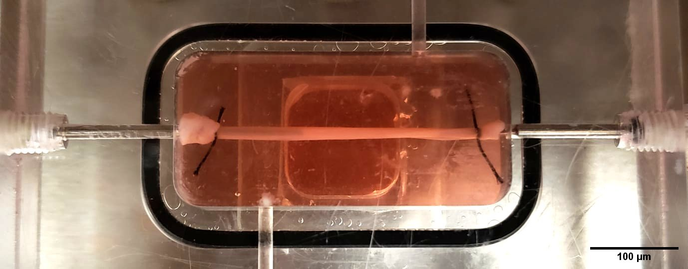 A small rectangular clear box with pink liquid and a blood vessel
