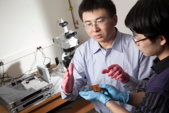 Assistant Professor Xuanhe Zhao (light shirt) and Qiming Wang, an undergraduate engineering student inspect a sample in Zhao's lab.