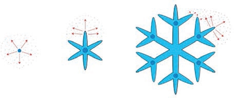 (A) spherical bead, (B) flat star with six arms, and (C) arms with secondgeneration arms that look like forwardpointing branches.