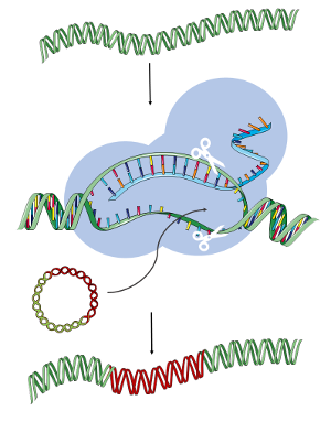 Cartoon images of squiggly DNA doing things