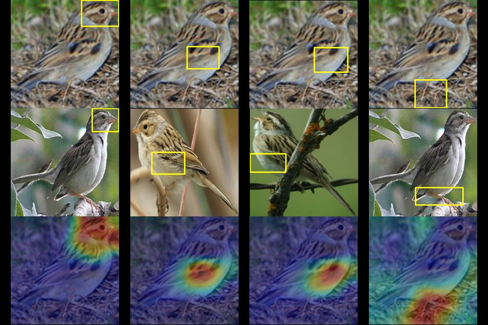 Images of birds with boxes drawn around identifying features along with infrared versions of the same images with 'hot spots' hi