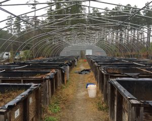 The mesocosms, tucked deep in the Duke Forest, currently lay dormant.