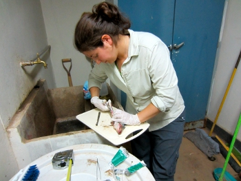 Sarah Diringer, a PhD student at Duke University, examines fish samples from the Madre de Dios River for potential human mercury exposure.