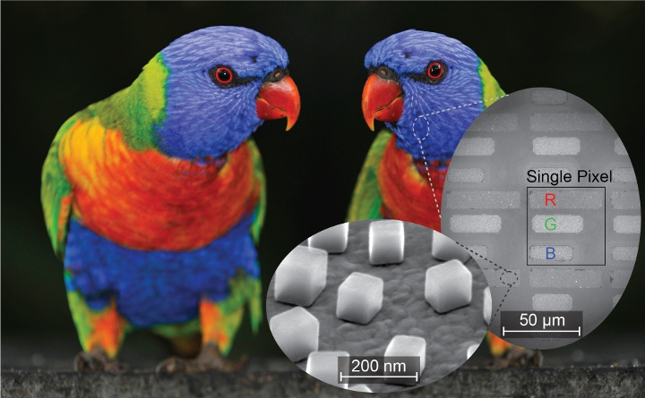 Researchers tested a new technique for printing and imaging in both color and infrared with this image of a parrot. The inlay shows how a simple RGB color scheme was created by building rectangles of varying lengths for each of the colors, as well as individual nanocubes on top of a gold film that create the plasmonic element. Credit - imageBROKER / Alamy Stock Photo