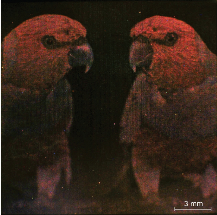 A closeup of the colorful parrot picture printed on a thin gold wafer using the new nanocube-based technology. The colors appear off because of the underlying gold, as well as the difficulties that typical cameras have of imaging the new technology.