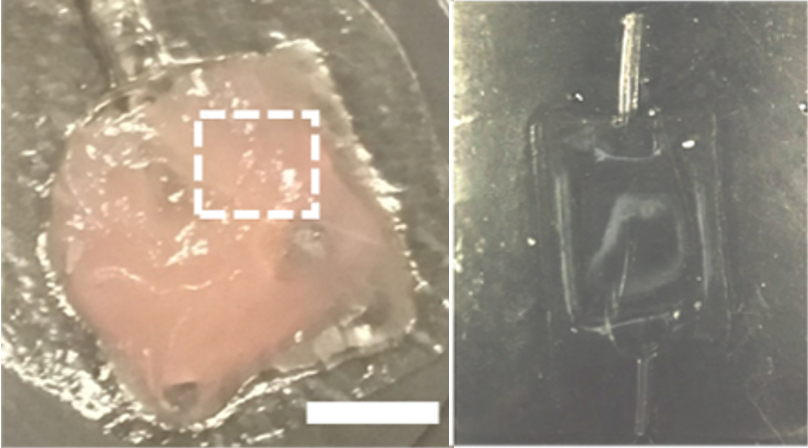 A black square under a microscope (right) and the same pouch (left) but filled with pink goo