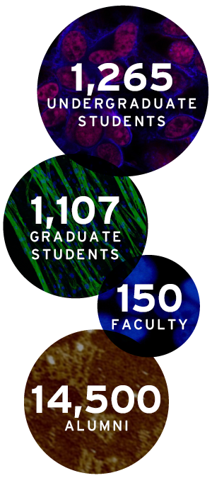 1265 Undergrad Students - 1107 Grad Students - 150 Faculty - 14,500 Alumni
