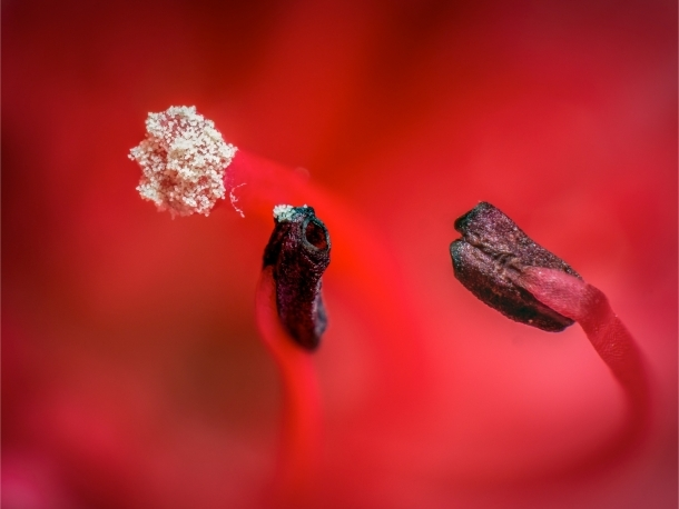 1st Place - Stefan Roberts - A beautiful image of the wildflower's stamen and pistil.