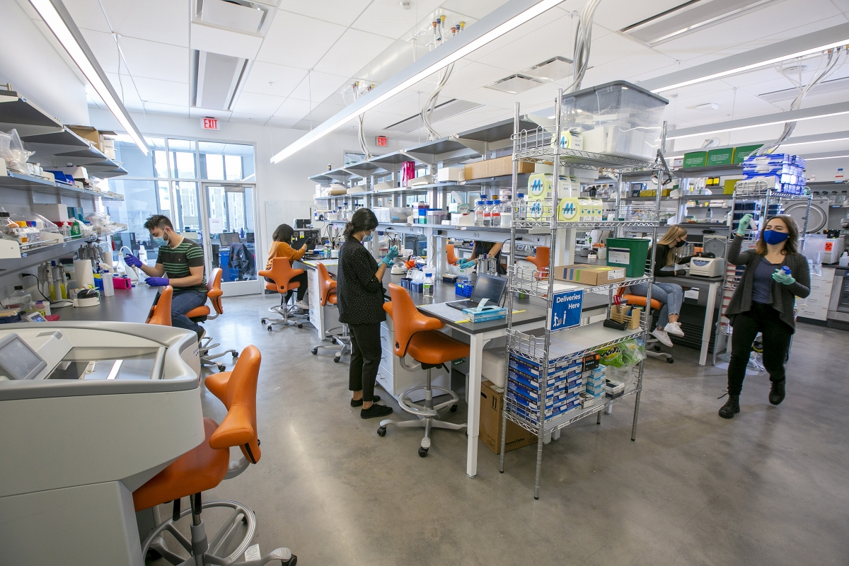 lab members work at benches in a new health research lab
