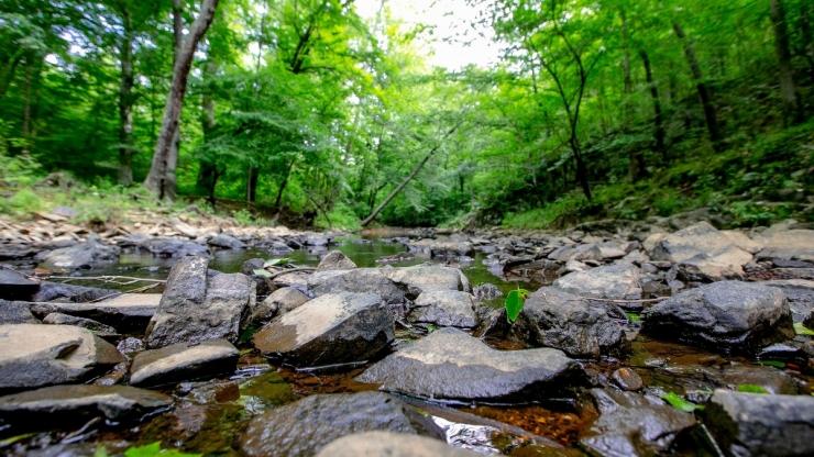 River in Duke Forest