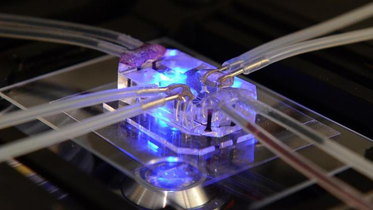 This lung-on-a-chip serves as an accurate model of human lungs to test for drug safety and efficacy. Wyss Institute for Biologically Inspired Engineering, Harvard University Photo