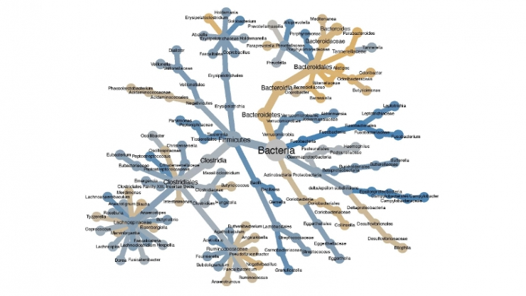 A tree-like graph with many nodes and names of bacteria