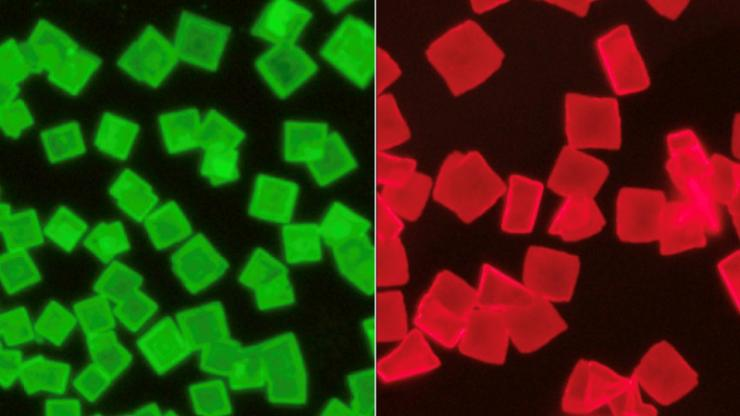 Neon green cubes on a black surface (left) and neon red cubs on a black surface (right)