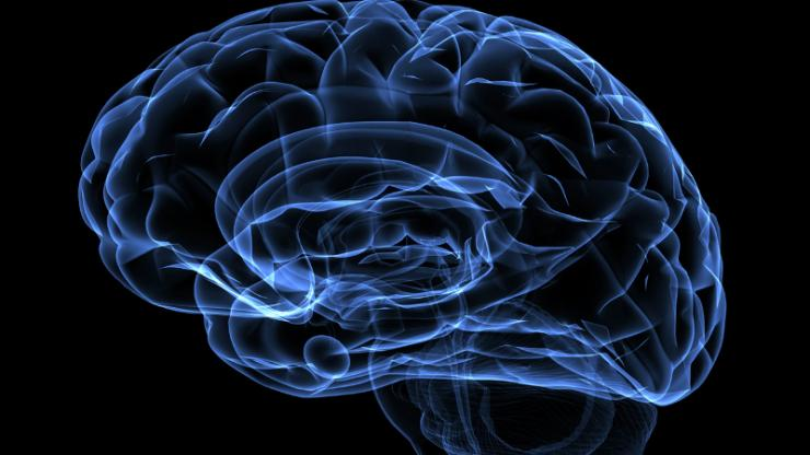 a blue outline of a human brain