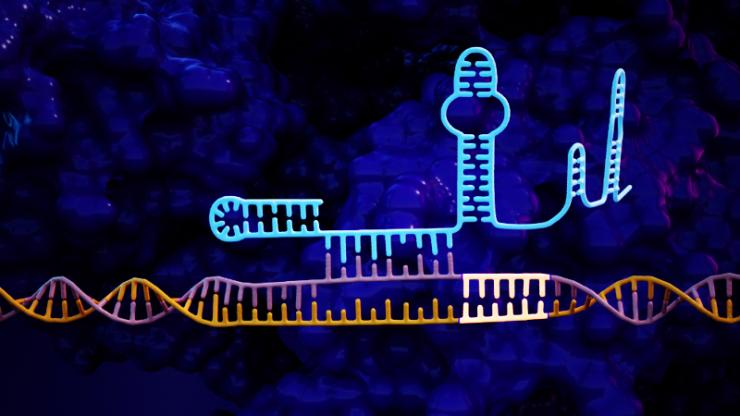 Neon depiction of CRISPR genetic sequence with added tail manipulating DNA
