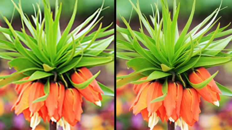 two images of a flower before and after 'sharpening' with a computer algorithm