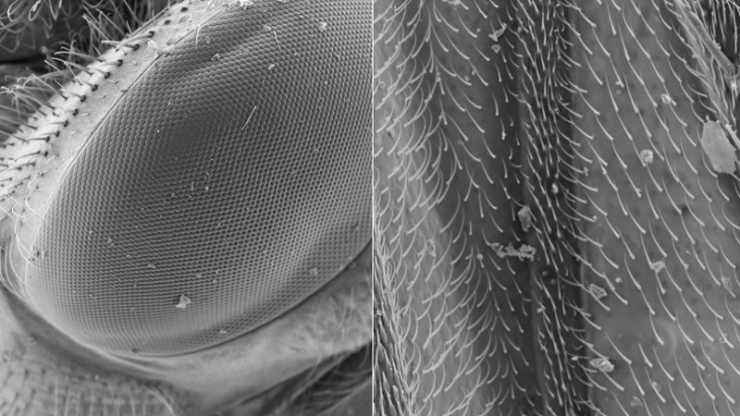 Super closeup view of a fly's eye and wing