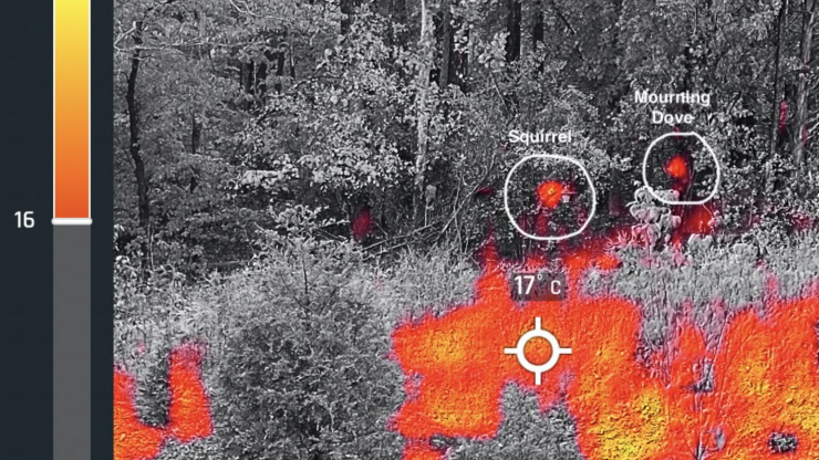 Squirrel and Mourning Dove identified with IR camera