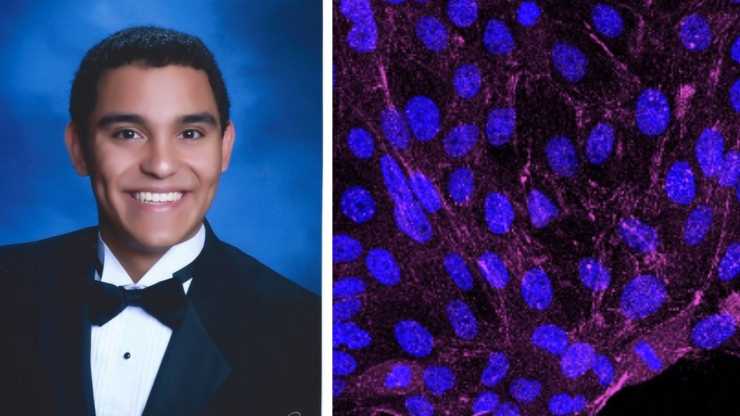 Jose Rivera worked in a faculty lab where researchers are building novel tension sensors and creating new analysis tools to characterize the spatial and temporal dynamics of mechanosensitive signaling during collective cell migration.