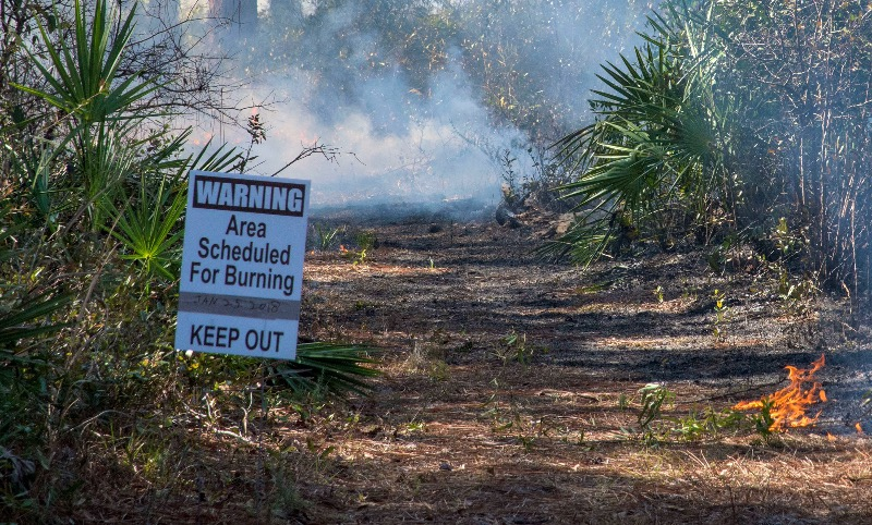 Prescribed burn at Eglin Air Force Base
