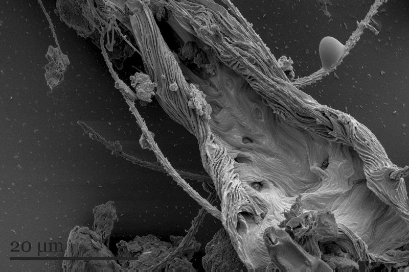 image of possible exploded insect leg taken with SEM